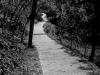 A Dreamy Trail