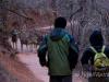 Deer On Trail