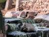 Duck Pond, Las Vegas 2
