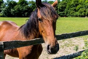 Horse Hairdo